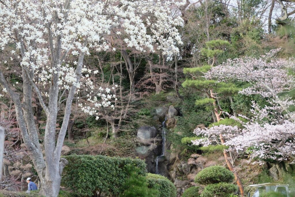 春の和庭園
