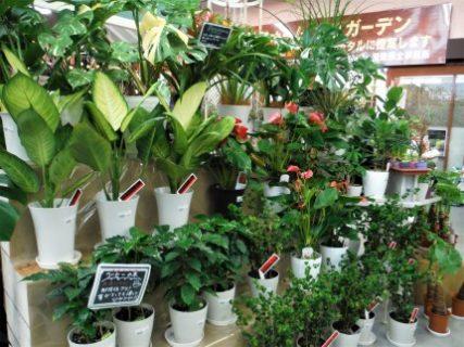 観葉植物の観察日記